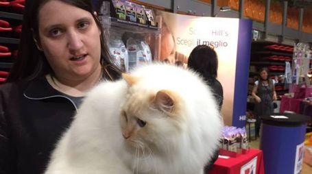 Uno dei felini in mostra