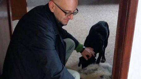 Il sindaco si prende cura dei cani