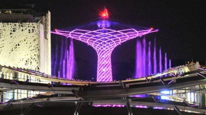 L'albero della vita emblema di Expo