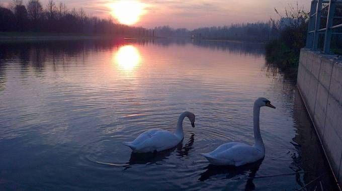 Maschio e femmina nello specchio d'acqua al tramonto