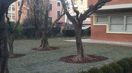 """Lo spazio esterno della scuola elementare """"Dante Alighieri"""", adesso"""