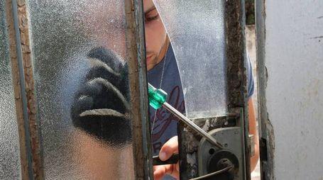Ladri in azione (foto Germogli)