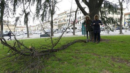 Vento forte a Prato (Foto Attalmi)