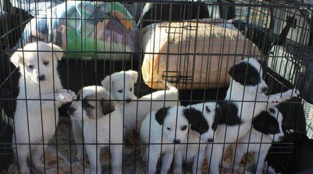 Cuccioli al canile comunale di Certaldo. Foto Gianni Nucci/Fotocronache