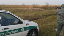 Gli agenti della provinciale hanno catturato, durante un intervento mirato,  un  cinghiale al confine con  Carmignano