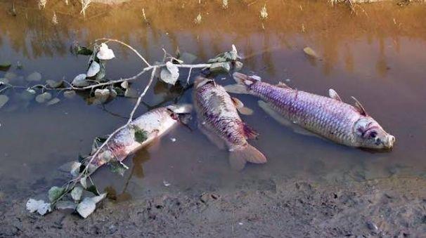Moria di pesci vietata la pesca nel laghetto della cava for La casa nel laghetto