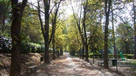 Viale del Giardino di Villa delle Rose