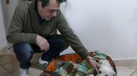 Nicola Bettazzi con il suo cagnolino Zachy: mercoledì sono stati aggrediti da due rottweiler. In basso Irene, Roberto e Lidia Giovannelli, residenti di San Giusto: anche loro vittime dei due feroci molossi Foto Attalmi