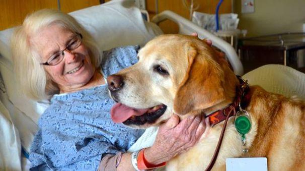 I cani in visita devono avere museruola e guinzaglio corto
