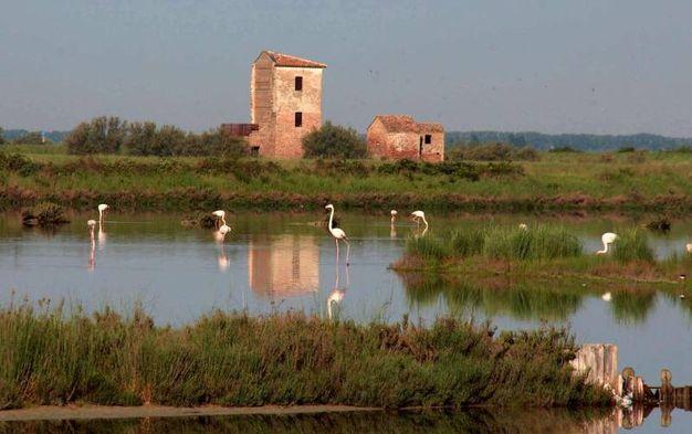 Comacchio (FE), Torre Rossa, Salina