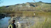 L'animale stava rischiando di affongare nel fango e nella melma