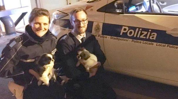 Gli agenti della municipale con i due cuccioli sequestrati