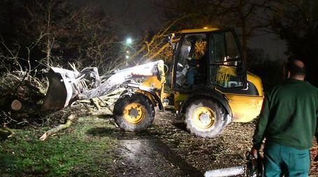 Un mezzo al lavoro per rimuovere un albero secolare crollato nel Parco