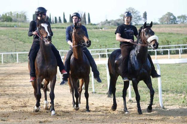 Corse a Mociano: i retroscena (Foto Di Pietro)