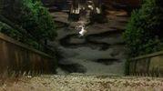 Alle 24 tra lampi, tuoni e vento: un giardino a Ca'Gallo