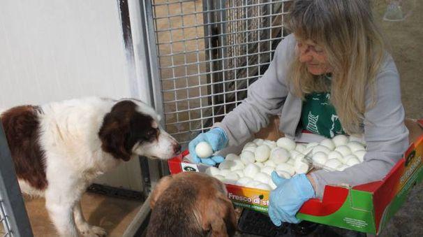 Il premio speciale ai cagnoni ospiti del canile (foto Pedini)