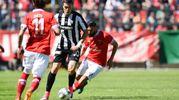 Favilli tra due giocatori del Perugia (foto LaPresse)