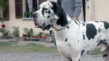 Il cane Zlatan