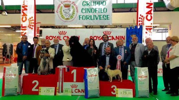 L'esposizione canina a Forlì
