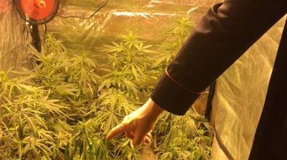 IL RITROVAMENTO Nell'armadio c'erano tredici piante di marijuana