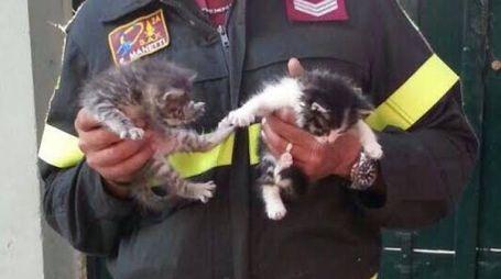 I gattini salvati
