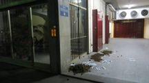 I cumuli di sterco di cavallo gettati nell'androne del palazzo in cui vive l'assessore Aldo Modonesi
