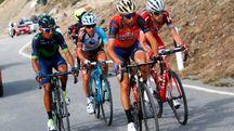 Quintana, Pozzovivo, Nibali e Zakarin sullo Stelvio (Afp)