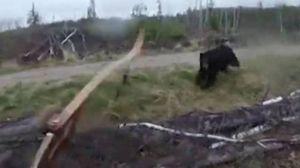 L'orso attacca, il cacciatore se la vede brutta (Lapresse)