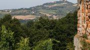 Bosco di Scardavilla