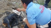 Il capretto salvato dai vigili alla Cava Balbano