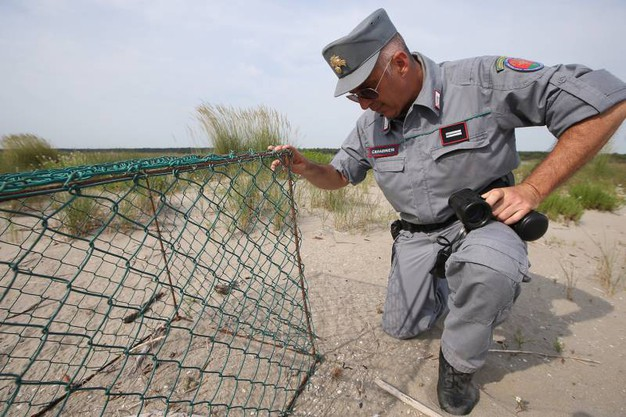 I nidi sono direttamente sulla sabbia, accolgono al massimo tre uova, grandi pochi centimetri e perfettamente mimetizzate (foto Zani)