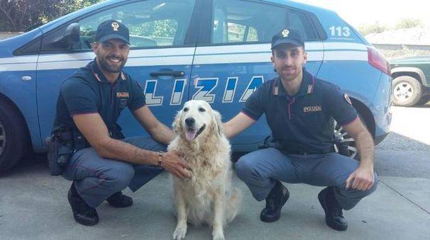 Gli agenti del commissariato hanno salvato un altro cane