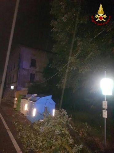Pianta sui cavi elettrici a Poviglio