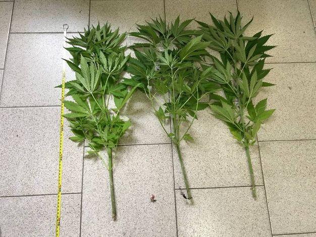 In tutto sono state sequestrate 4 piante di marijuana