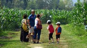 Una famiglia visita il labirinto (Foto Scardovi)