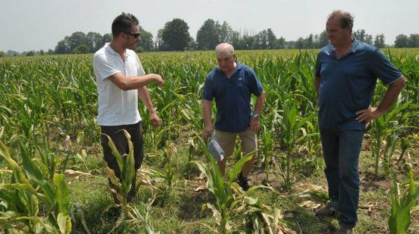 I coltivatori alle prese con la siccità