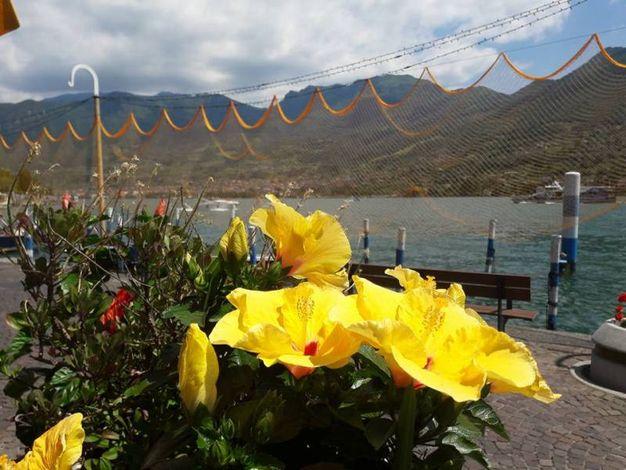 Le decorazioni a tema al bar dei porti di Monte Isola