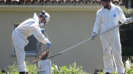 L'INTERVENTO Enel Green Power ha messo al lavoro  6 addetti per recuperare le carcasse