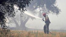 L'incendio in zona Oliveto (Foto Aprili)