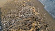 La cera sulla spiaggia