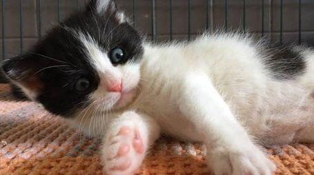 Uno dei gattini salvati