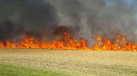 In via Masaniello va a fuoco il campo di sterpaglie