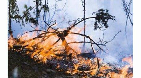 493 Incendi a Lucca per una superficie boscata di 593 ettari