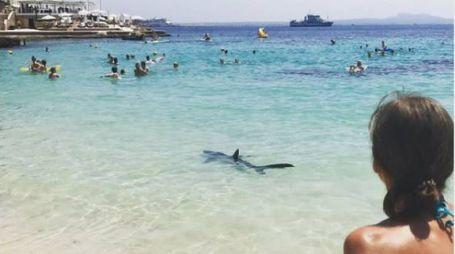 Maiorca, panico per uno squalo tra i bagnanti (Foto Twitter)