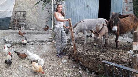 """Vergato, ambientalista presa di mira. """"I miei animali torturati"""""""