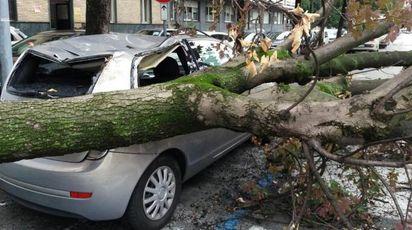 Maltempo a Torino, albero cade sopra una macchina (Ansa)