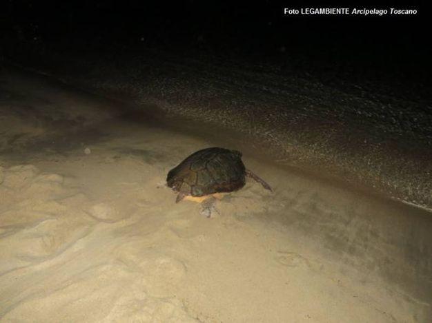 La tartaruga marina