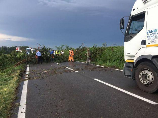 Via Nazionale bloccata a causa degli alberi caduti ad Altedo