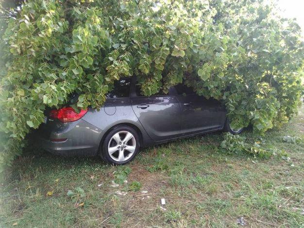 Auto schiacciata da un albero (foto Bellini)