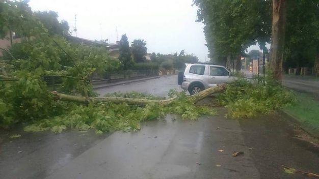 Alberi caduti a Ostellato e Bondeno